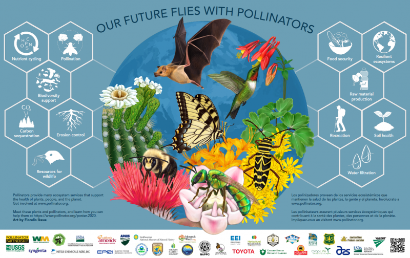 'Our Future Flies with Pollinators' poster by Pollinators.org; highlighting the multiple ecosystem services pollinators provide.